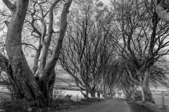 Dark Hedges, Ireland